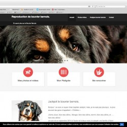 visuel creation site animalier