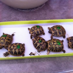 tortues 2ans