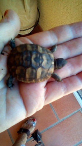 tortue-2