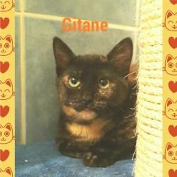chatone Gitane