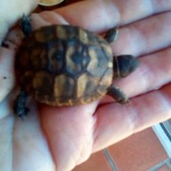 tortue-2