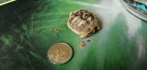 tortues bebe2