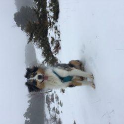 Mangguo à la neige