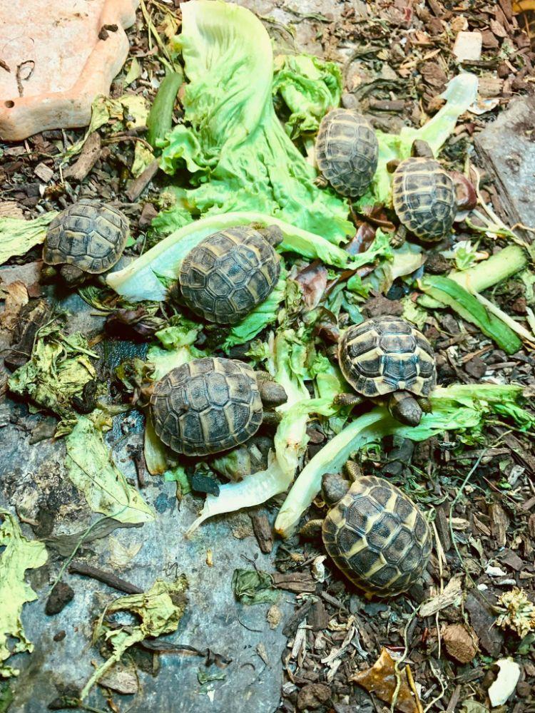 tortues 1