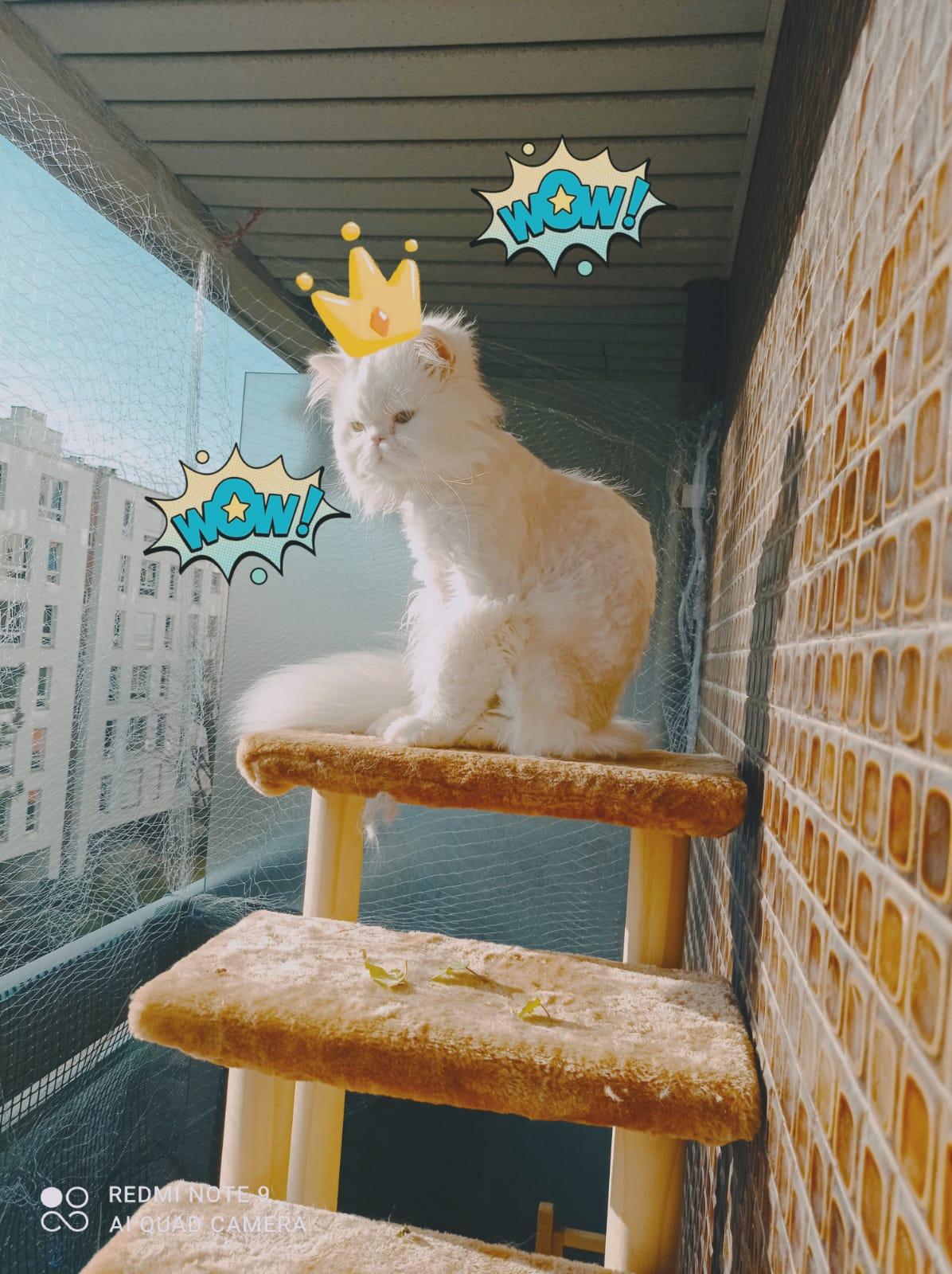 Kiki sur son balcon en hauteur