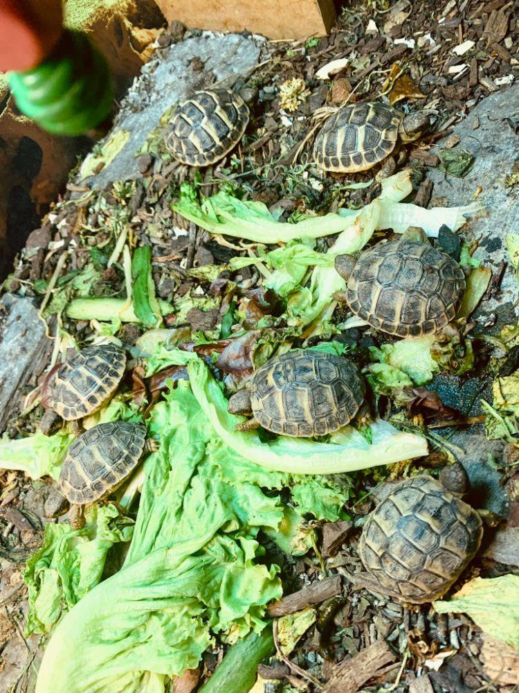tortues 2